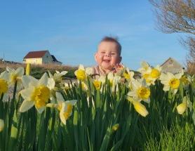 Greta Grampys Daffodils