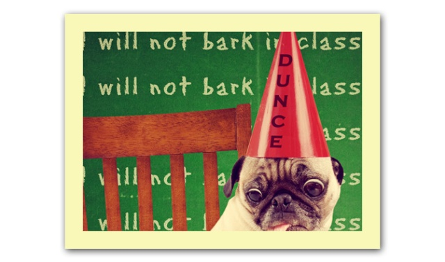 funny dog card with a pug wearing a dunce hat looking at an app