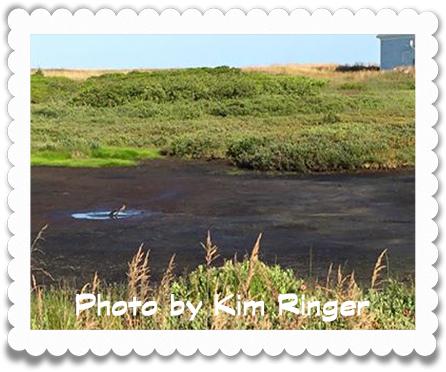 Kim Ringer's Pond
